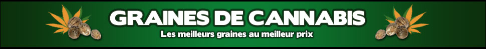 Graine Cannabis